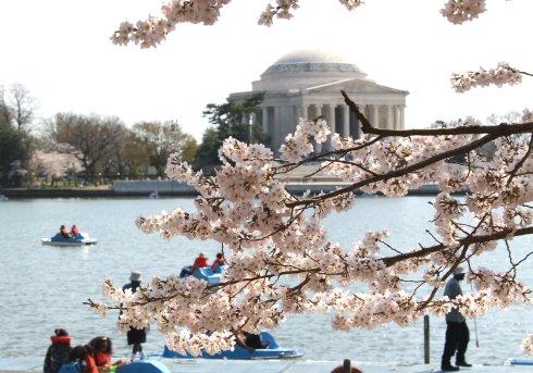 2013-04 Cherry Blossom Festival 3