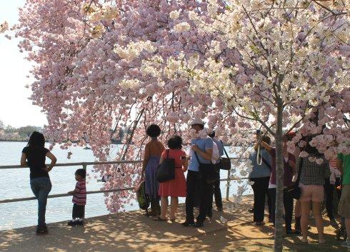 2013-04 Cherry Blossom Festival 5