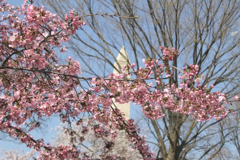 2013-04 Cherry Blossom Festival 8